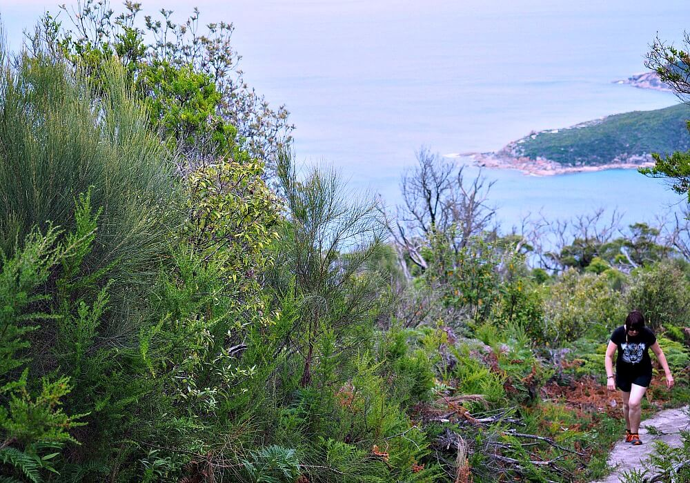 Hiking Sparkes Lookout