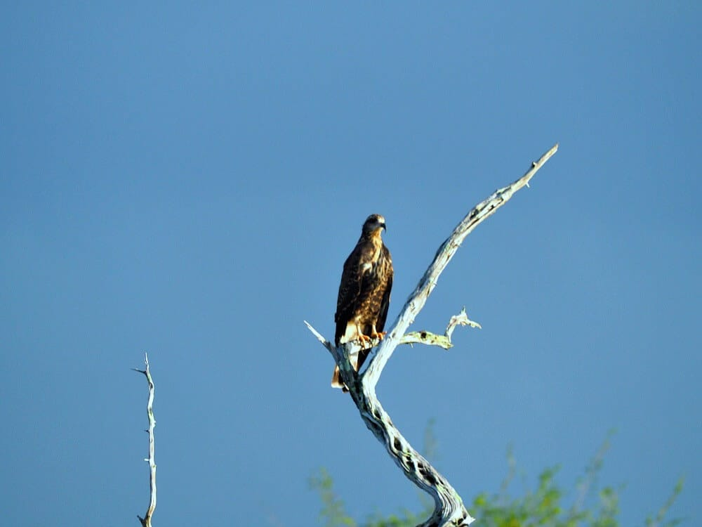 Osprey Eagle Crooked Tree boat tour